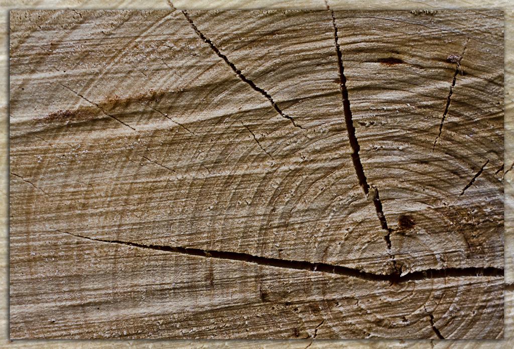 Como prevenir y tratar la aparicion de carcoma en la madera for Como tratar la madera