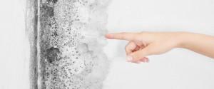 ¿Cómo pintar pared con humedades?
