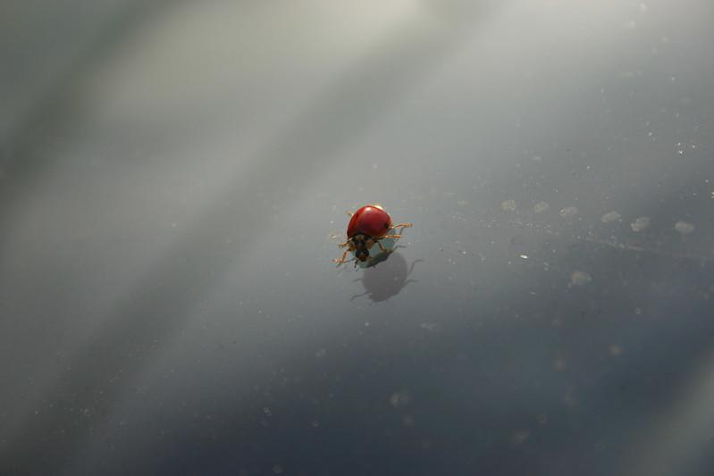 El limpiador de insectos Zaphiro te ayuda a eliminar facilmente los insectos muertos de los cristales de tu coche